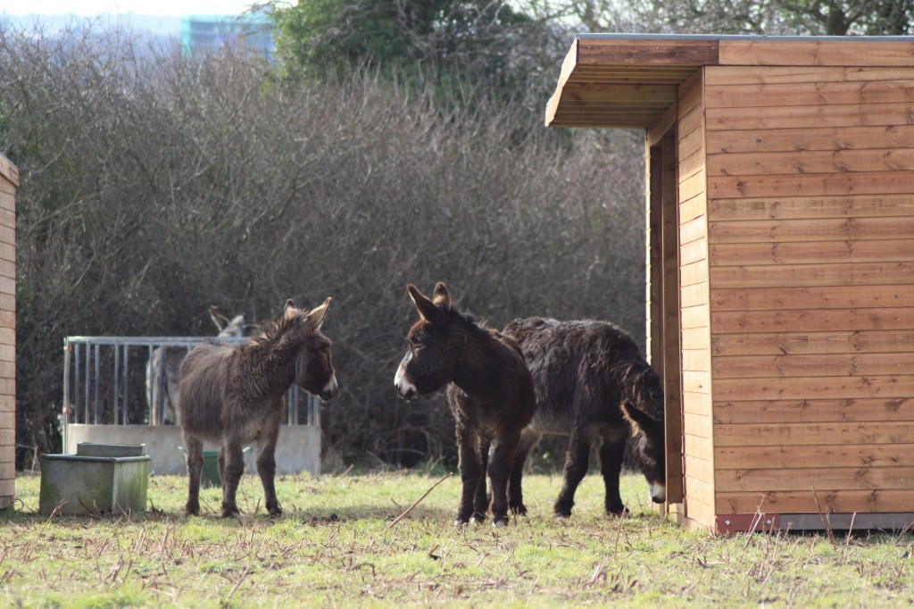 Blackheath Donkeys in their new home