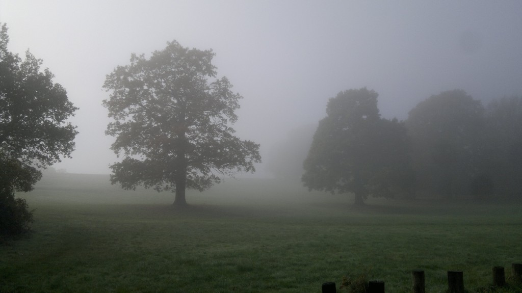 A Foggy Day in Shrewsbury Park