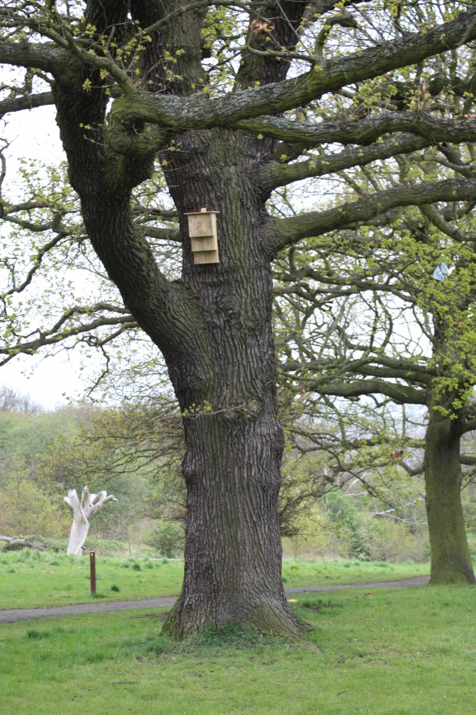 Bat box in Shrewsbury Park