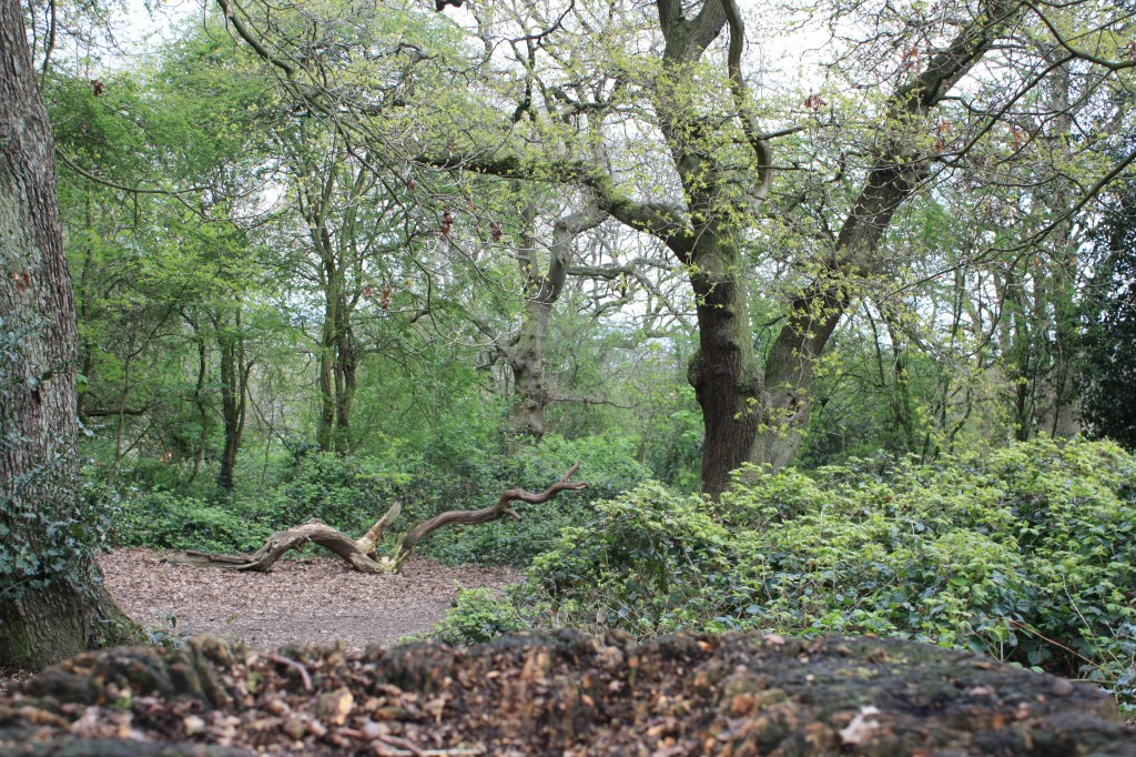 Shrewsbury Park Woods