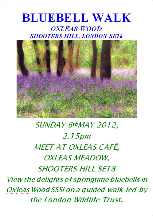 Bluebell Walk Poster