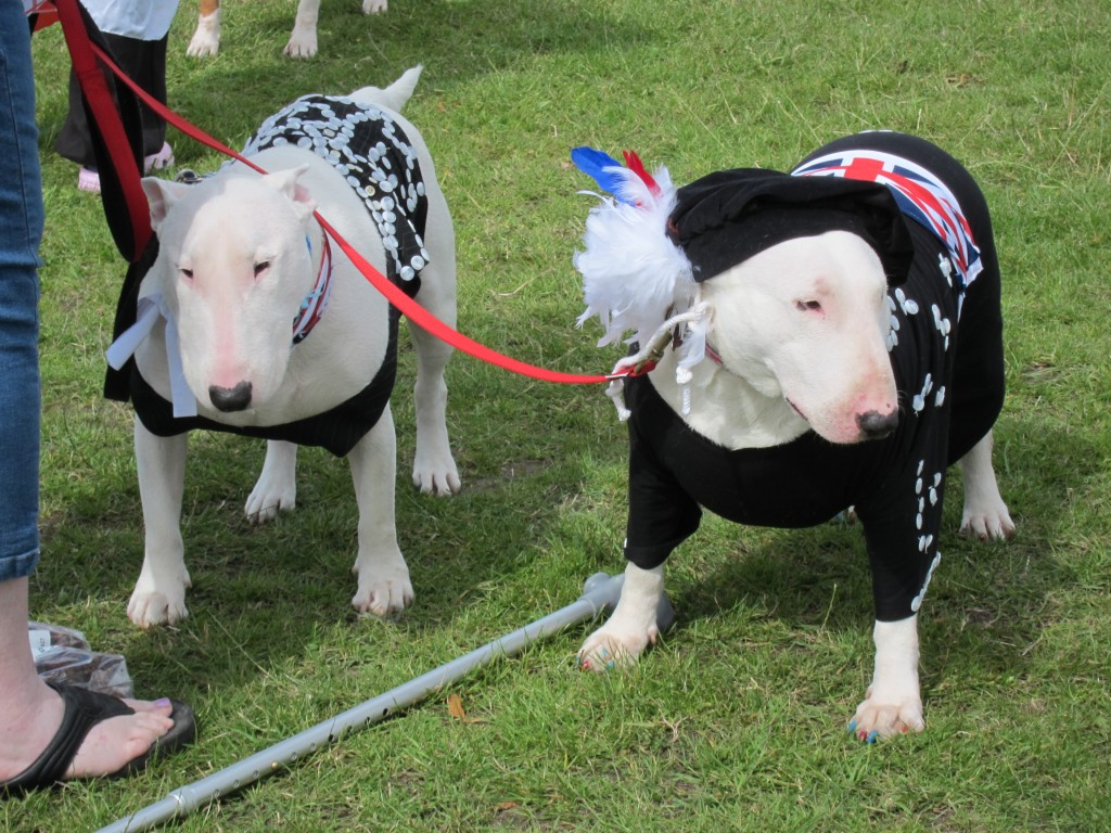 English Bull Terriers Diamond Jubilee fancy dress parade in Eltham Park South