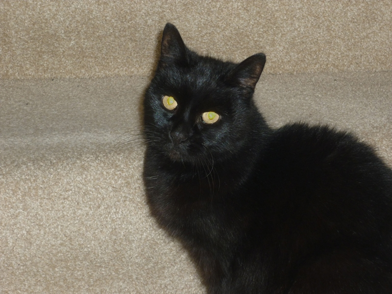 Can you give this black cat a loving home?