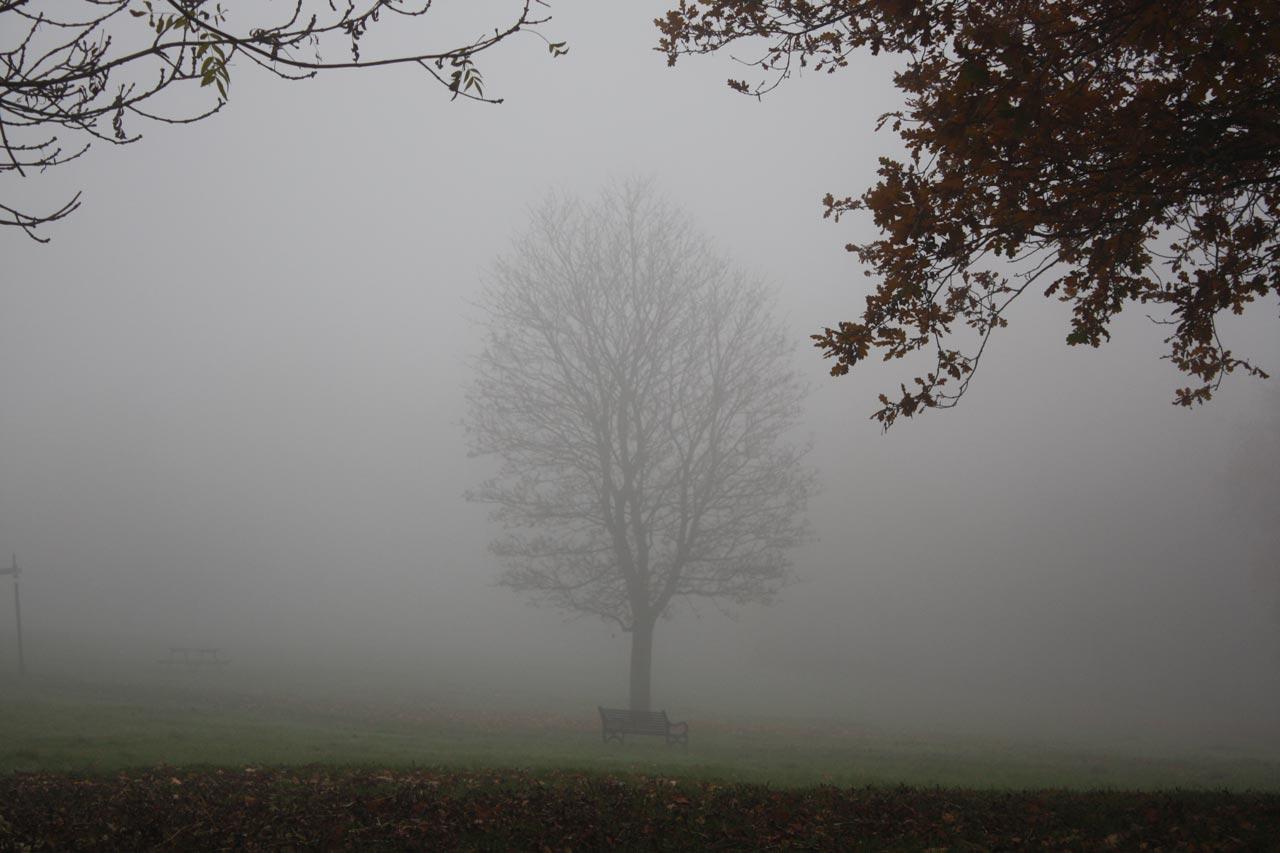 Autumnal Eaglesfield Park