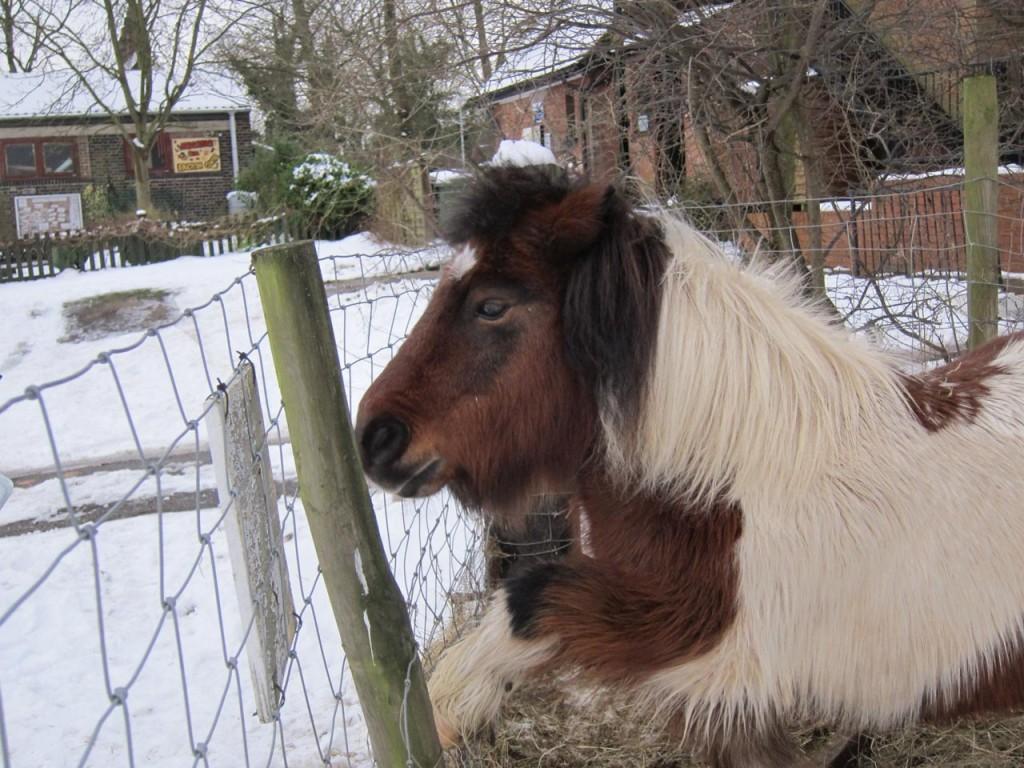 Bob the pony