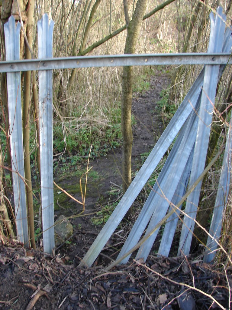 Fence between bridge and Swingate Wood 11 am