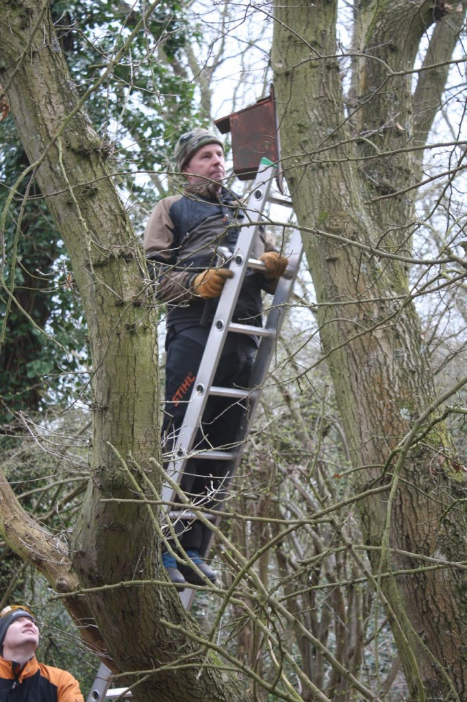 Putting up bird boxes in Shrewsbury Park