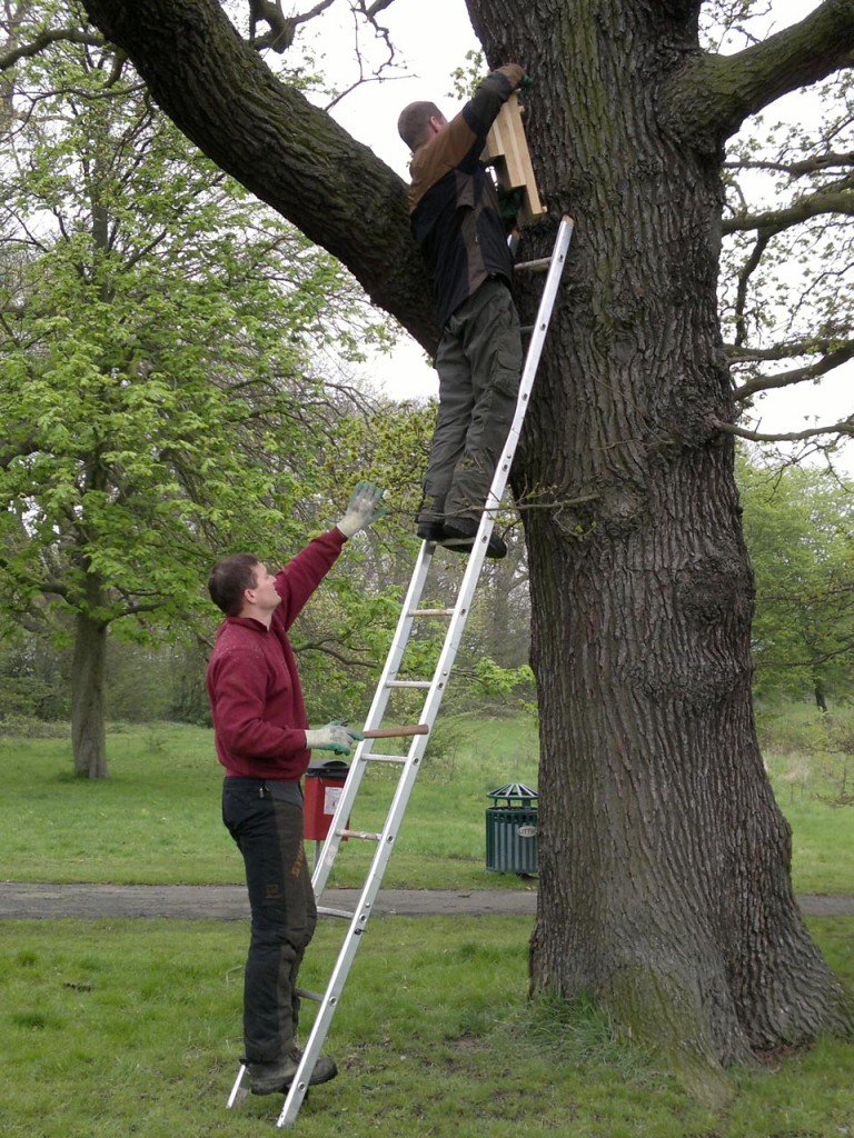 Putting up bat boxes in Shrewsbury Park