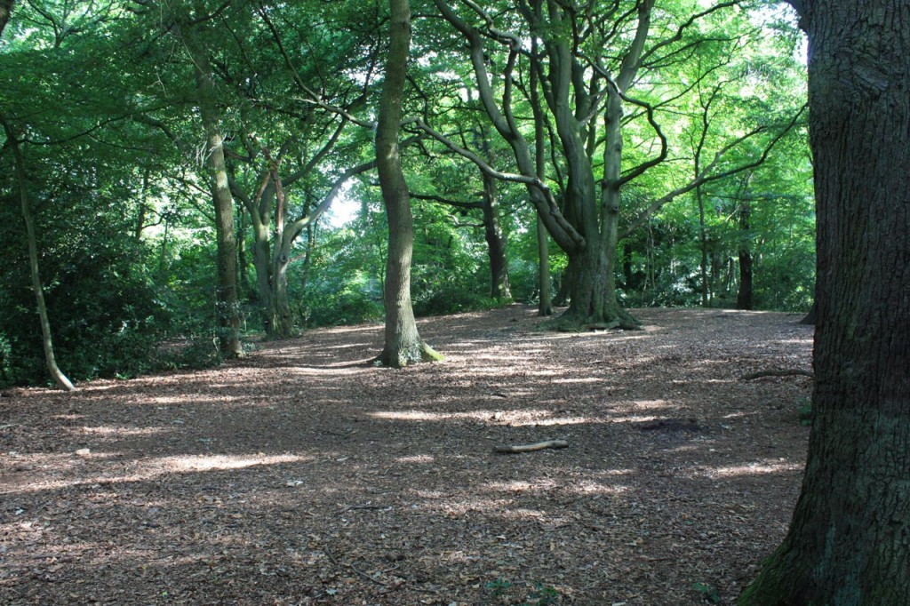 The woods on Eltham Common