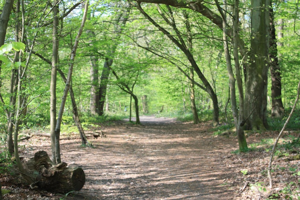 A path through Oxleas Wood