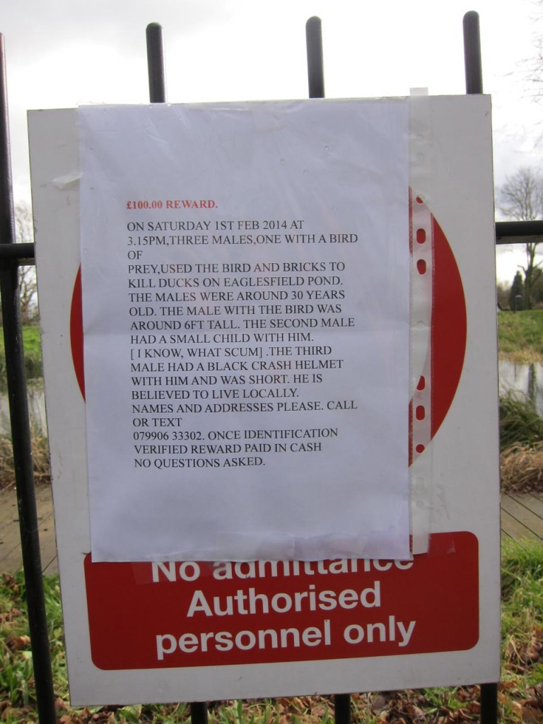 Poster about attack on ducks in Eaglesfield Park