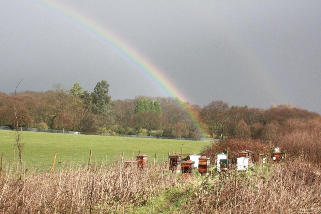 Rainbow and beehives at Woodlands Farm