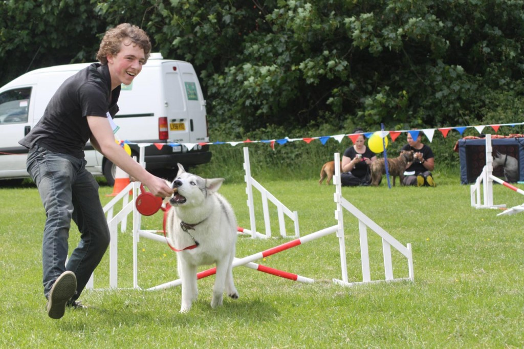 Agility competition at Shrewsbury Park Summer Festival