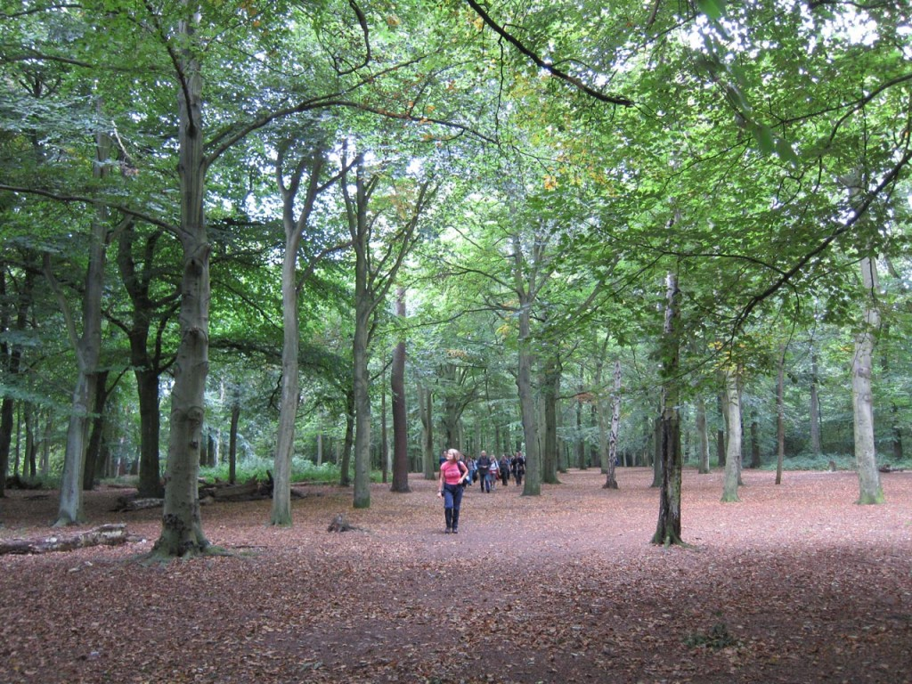 Green Chain walkers in Bostall Wood