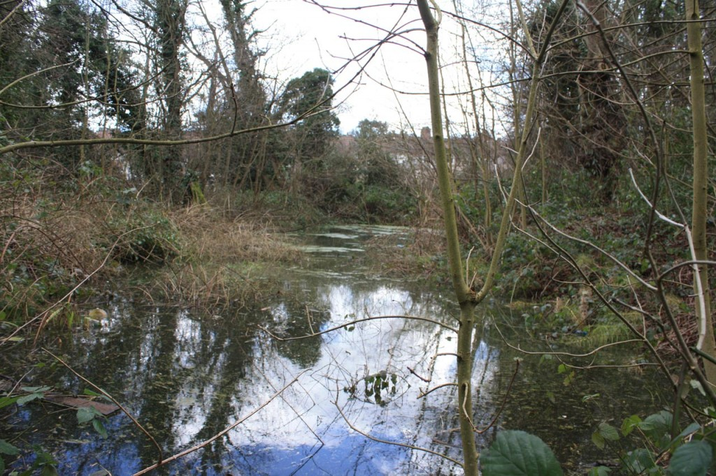 The pond in the Constitution Hill woodland