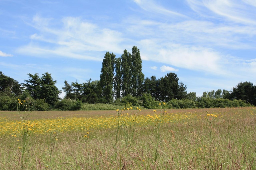 Wild flower meadows at Woodlands Farm