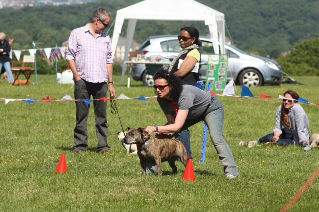 Fastest Dog Competition at 2013 Shrewsbury Park Summer Festival