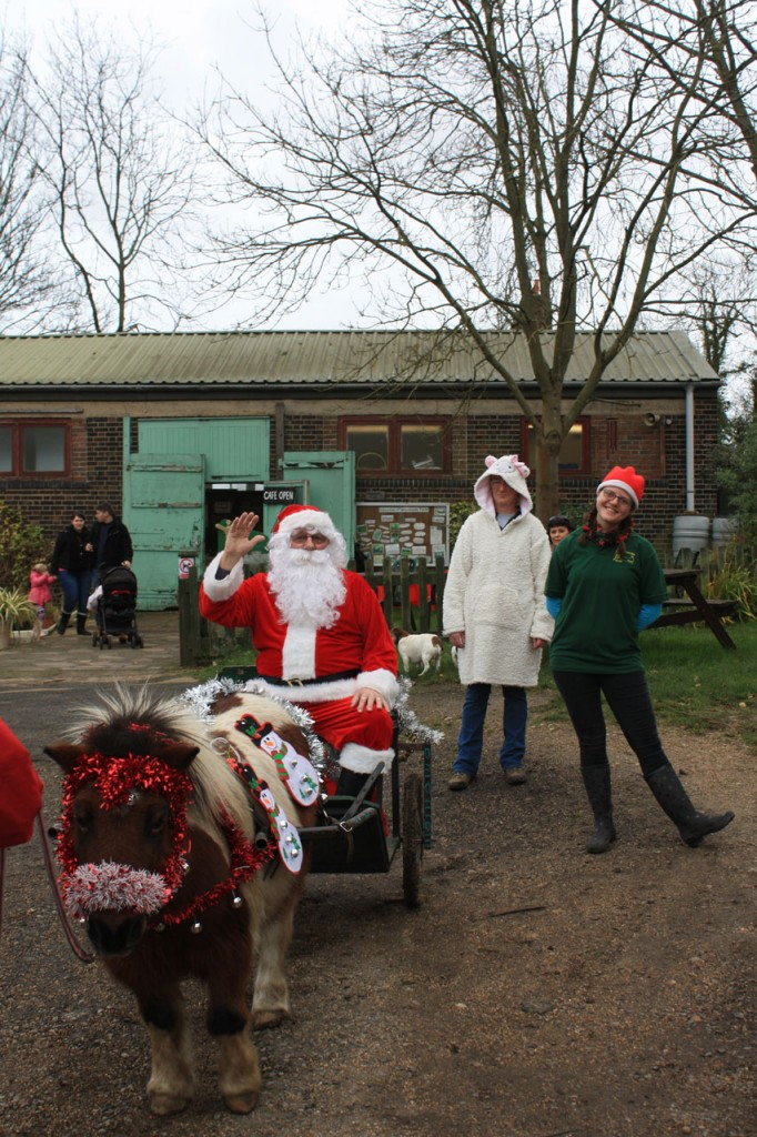 Father Christmas arrives at Woodland Farm, pulled by Bob the pony