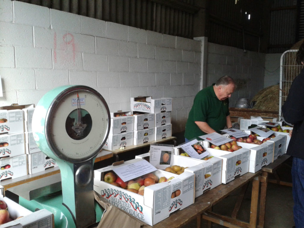 Apple Day at Woodlands Farm