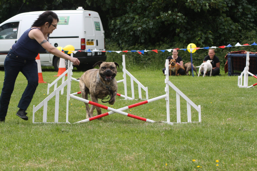 Agility competition at the 2013 Shrewsbury Park Summer Festival