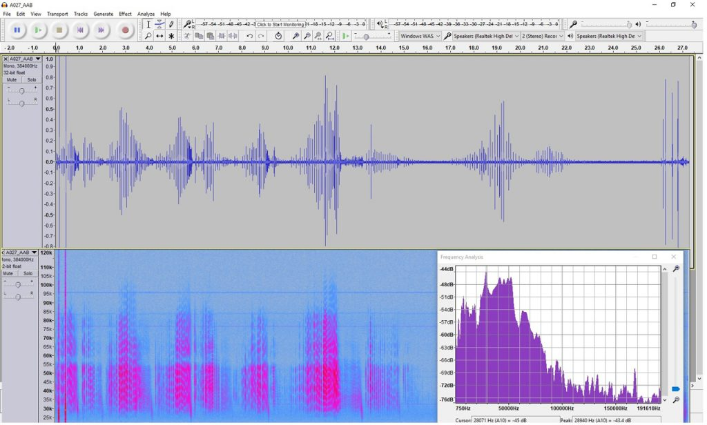 Recording and spectrogram of Daubenton's bat in Audacity
