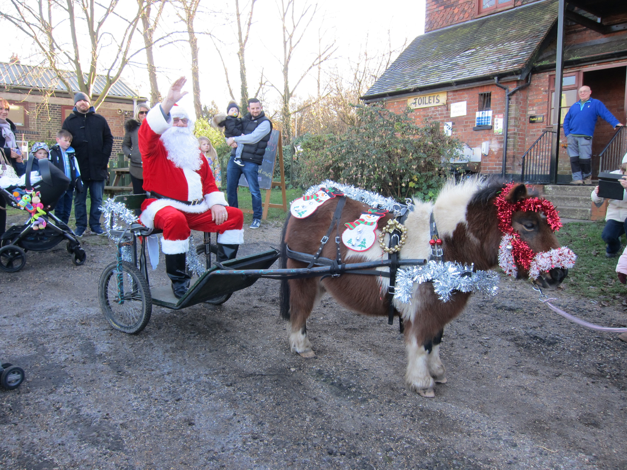 Bob the pony pulls Father Christmas to his grotto at Woodlands Farm