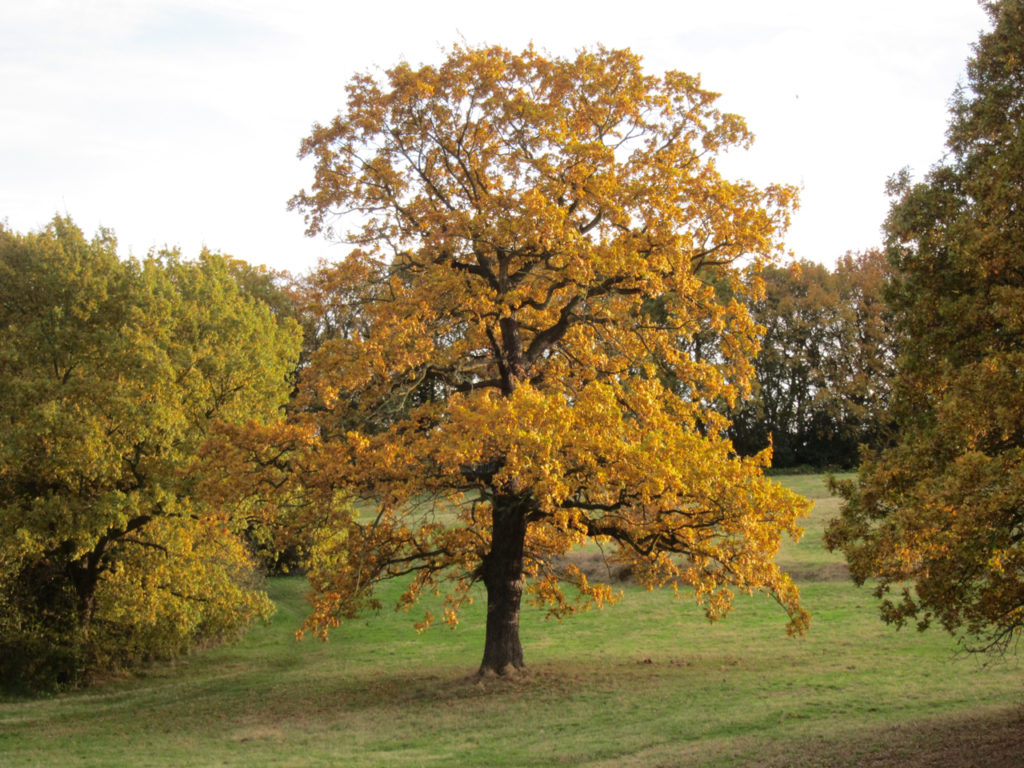 Autumnal tree in Shrewsbury Park