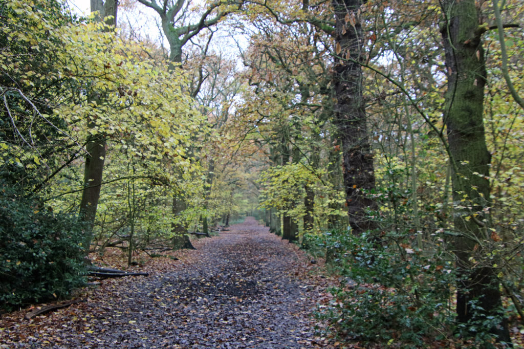 Tree-lined Coulthurst's Drive in Oxleas Wood